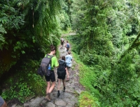 Trekkers walks in Jungle in Annapurna