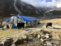 A Yak Hut in Dudh Kunda Trek