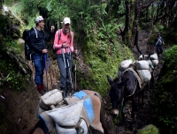 Mule Transportation in Mardi Himal