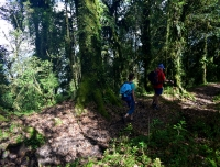 Trekkers walking in nature in Mardi Himal Trek route